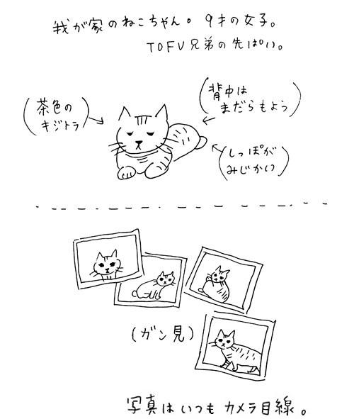 tofucat_1011.jpg